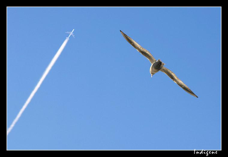 La Mouette et l'avion