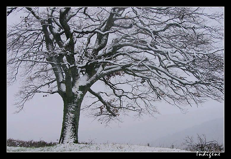 L'arbre au sommet