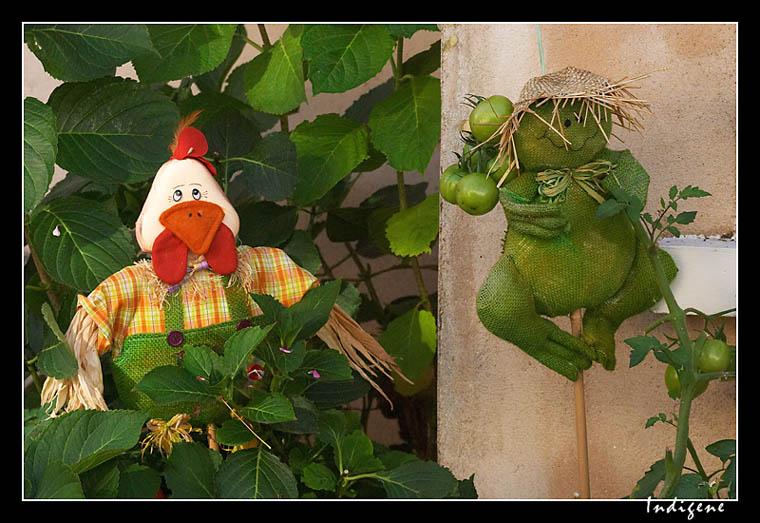 La grenouille et le jardinier