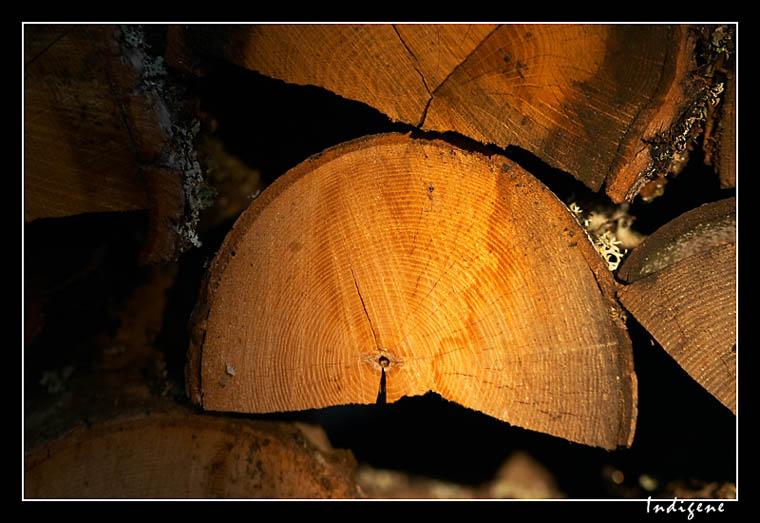 Les billes de bois
