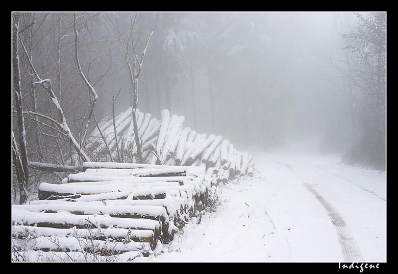 La neige dans les bois