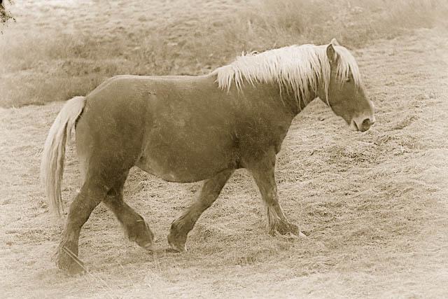 Le vieux cheval