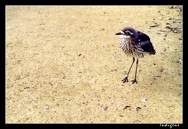 Un jeune oiseau