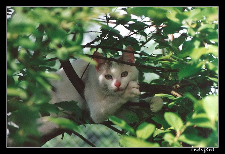 Kiss dans l'arbre