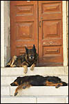 photo Les chiens