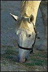 photo Le cheval