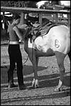 photo Les préparatifs du cheval