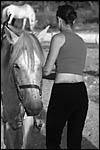photo Le cheval blanc