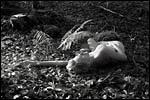 photo Couchée dans les bois