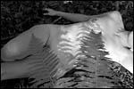 photo Au détour d'un bosquet