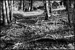 photo L'automne en noir et blanc