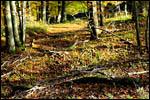 photo Les bois en automne