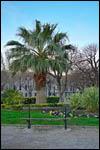 photo La palmier de l'esplanade
