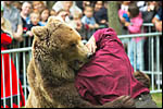 photo L'attaque de l'ours