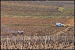 photo Les vignobles