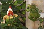 photo La grenouille et le jardinier