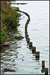 photo Le Lac du Héron