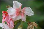 photo Dernières fleurs