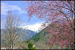 photo Le printemps à Vernet