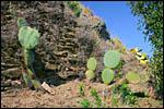 photo Les castus dans les collines