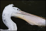 photo Le Pelican