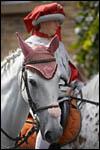 photo Cheval blanc au défilé