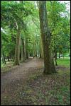 photo Chemin en forêt