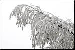 photo La branche plie sous le poids du givre