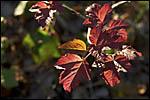 photo Feuilles d'automne