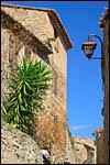 photo Cactus dans les rues de Castelnou