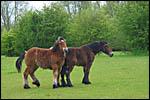 photo Les chevaux du lac