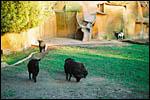 photo Les chèvres