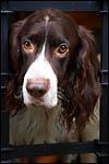 photo Le chien triste