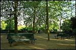 photo Les arbres du Jardin Darcy