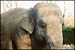 photo L'éléphant