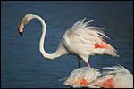 Galerie Parc des oiseaux - Camargue