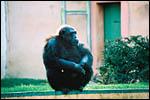 photo Le gorille
