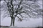 Galerie Paysages d'hiver