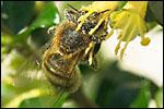 Galerie Insectes et petites bêtes