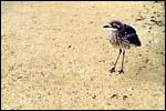 photo Un jeune oiseau