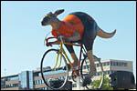 photo Kangourou cycliste