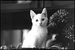 photo Kiss en noir et blanc