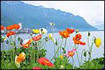 photo Vue sur le Lac