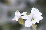 photo Insecte