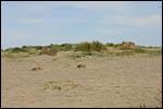 photo Dune de sable