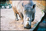 photo Le rhinoceros