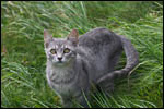 photo Sokette dans l'herbe