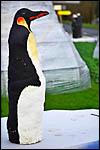 photo La statue du manchot