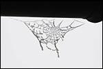 photo toile d'araignée givrée