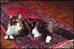 Galerie Photos de chats